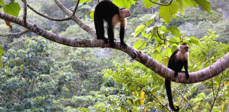 La giungla politica che distrugge la foresta vergine